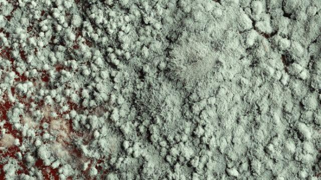 mold remediation in miami,fl