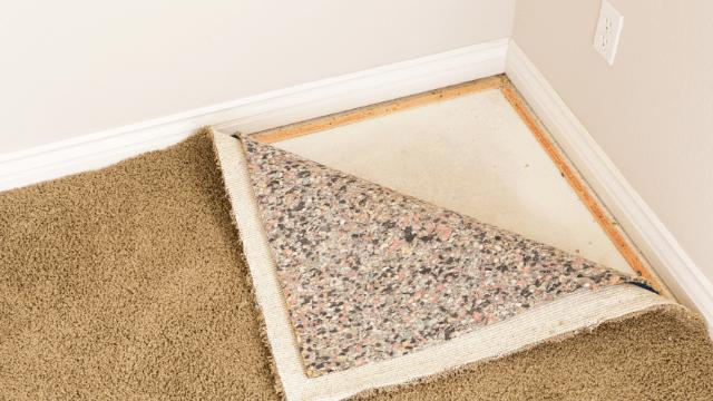 can-black-mold-grow-on-carpet